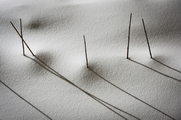Sticks in snow