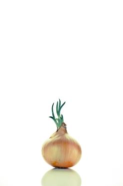 The star onion