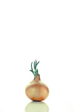 The star onion