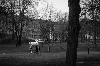 Humanback riding