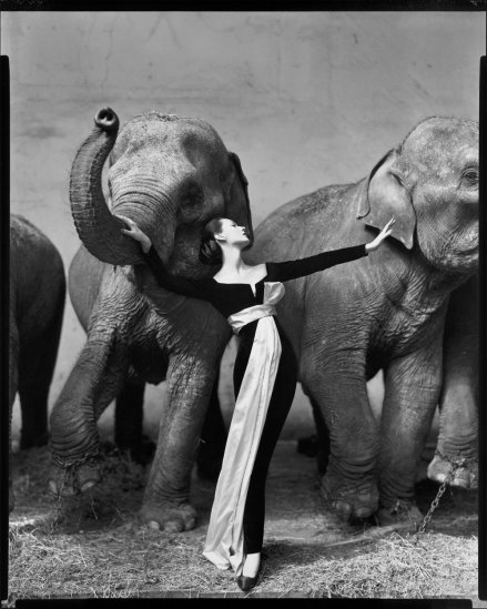 Dovima with Elephants, at Cirque D'Hiver, Paris, August, 1955